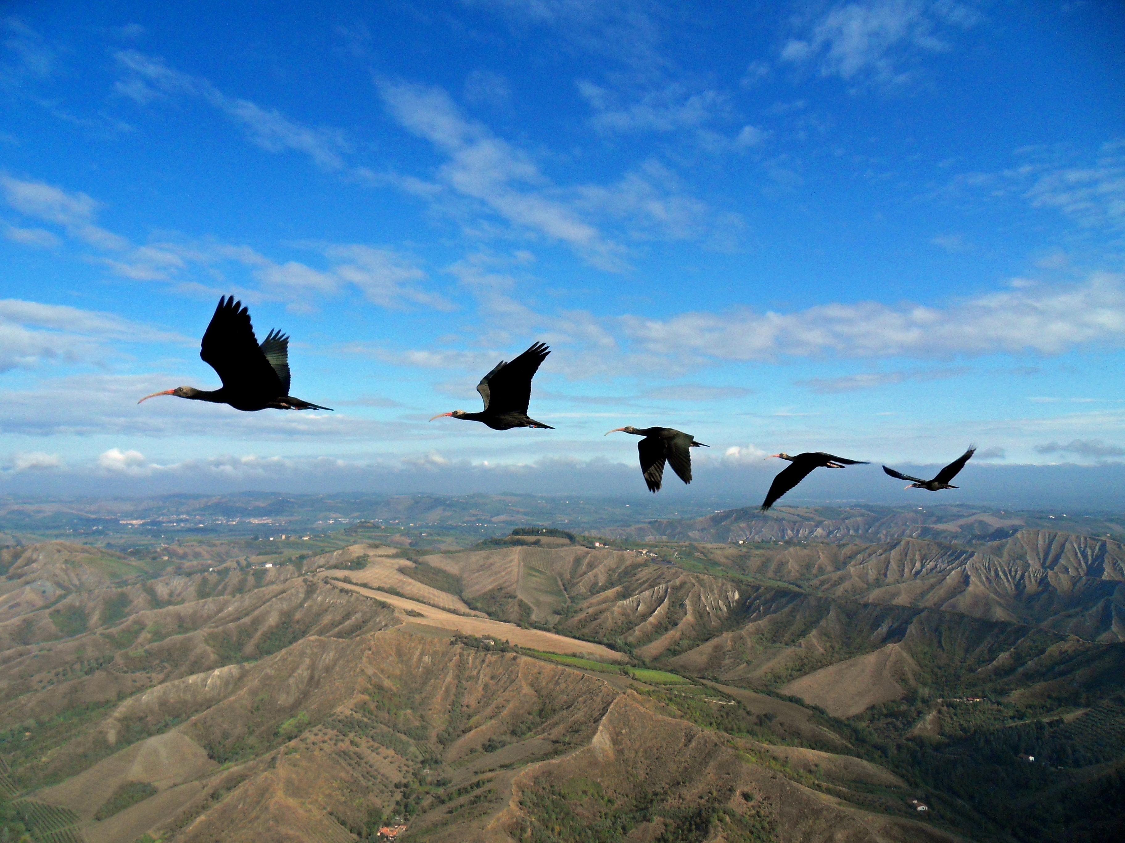 Γιατί τα πουλιά πετούν σε σχηματισμό V